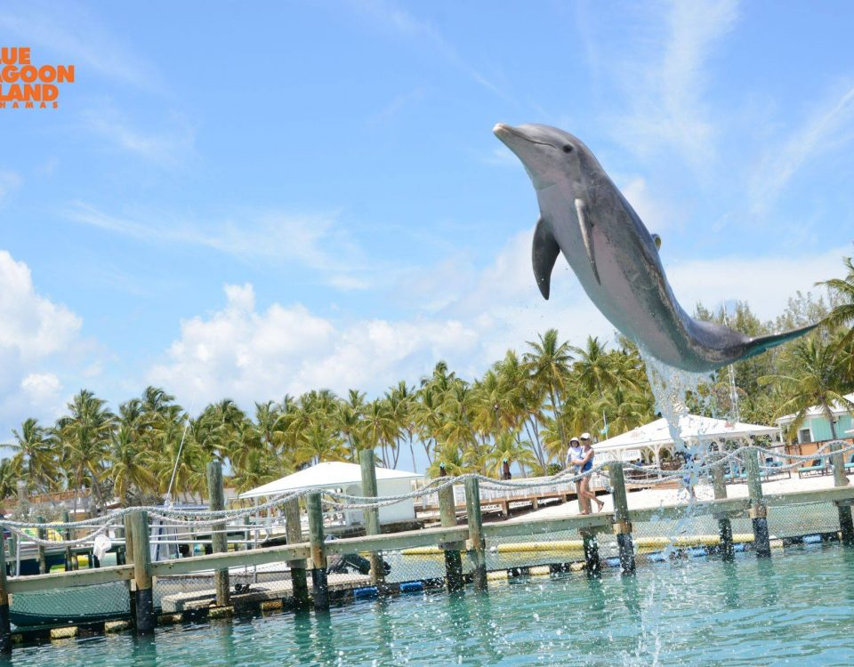 #Dolphins are truly magical, childlike creatures…such an incredible creation!
